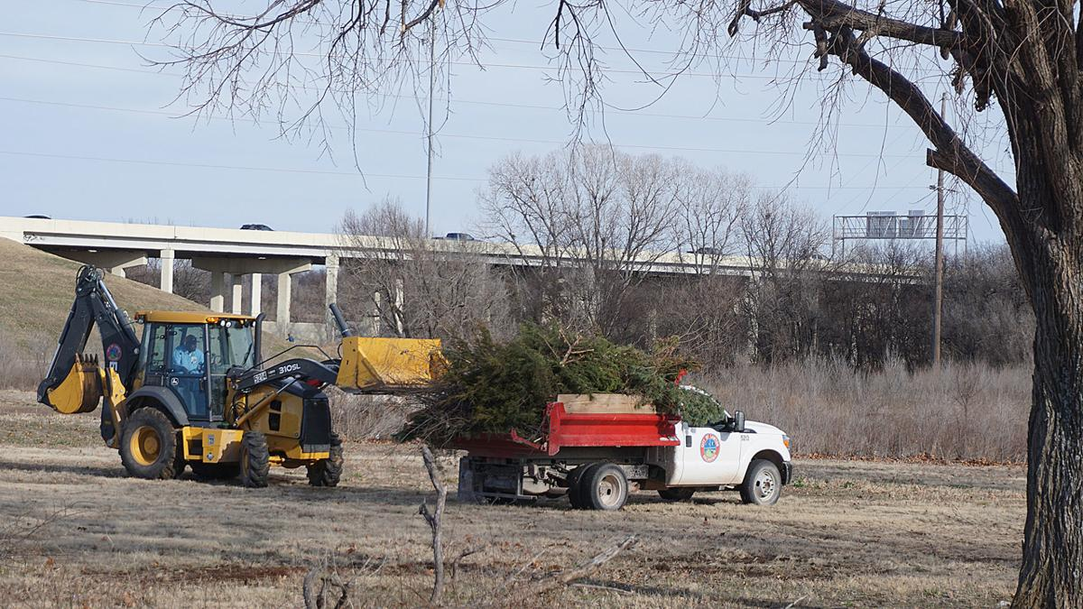 Trimming tree at the city of Lawton Parks