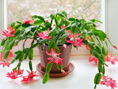 Flowering house plants for every season