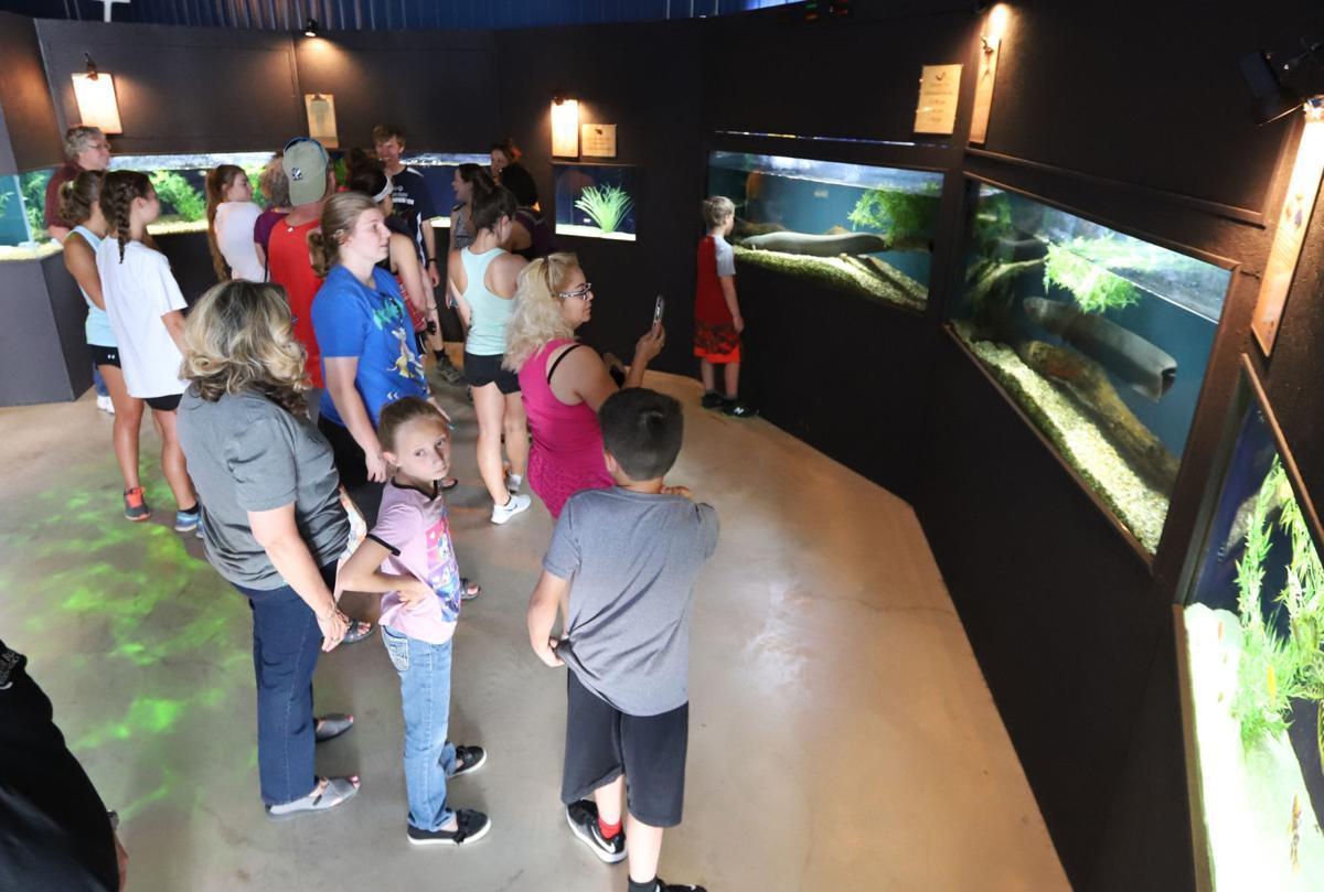 Aquarium to celebrate four years.