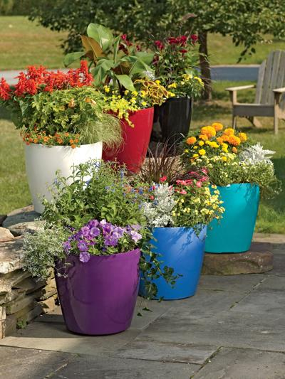 Growing patio plants in containers