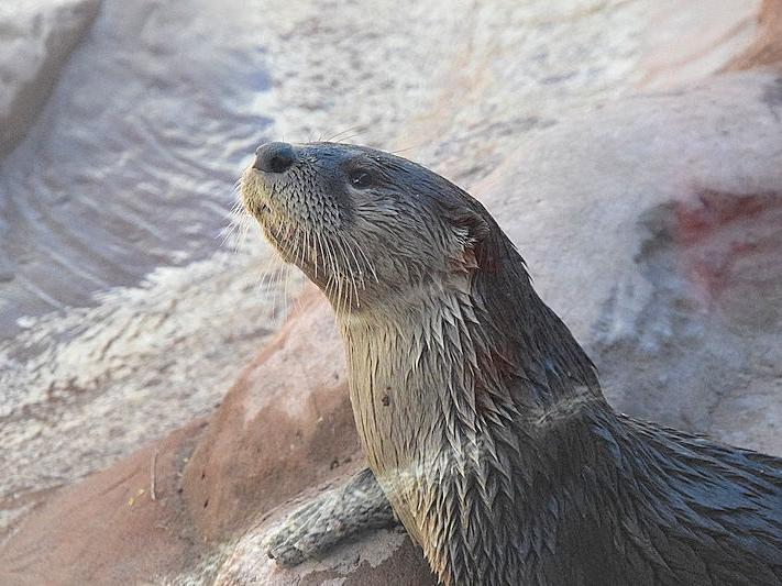 Medicine Park Aquarium & Natural Sciences Center seeks donor assistance