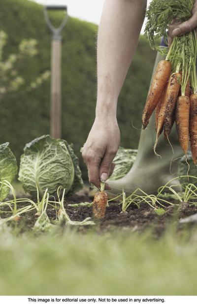 Tips for planting fall vegetables