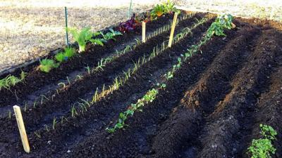 Tips on starting a vegetable garden in the backyard