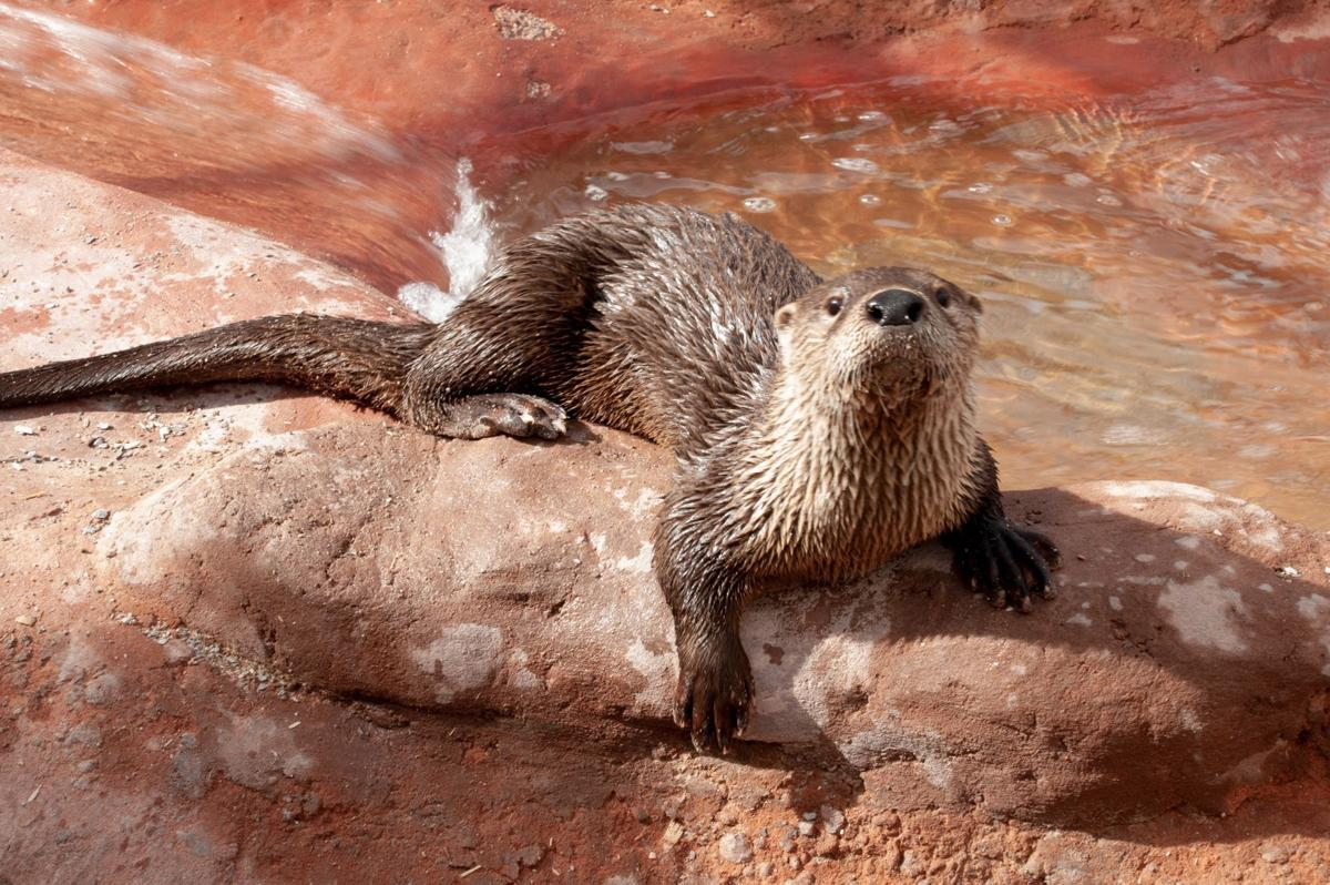 Otters ready for guests