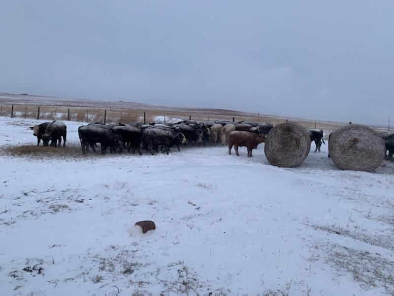 Weather creates challenges for ranchers
