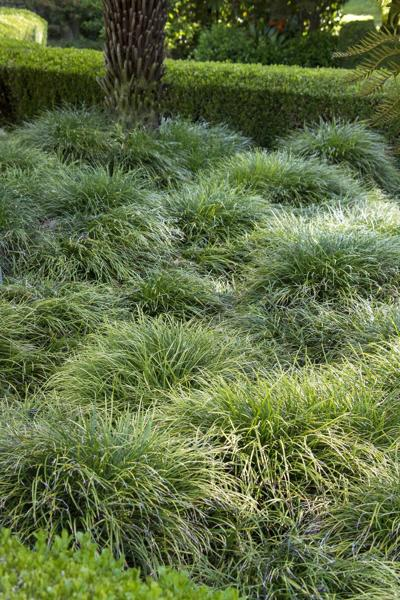 Groundcovers that keep out weeds