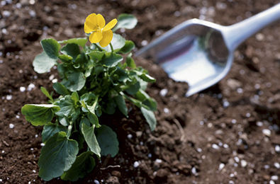 Applying the right fertilizer to your plants