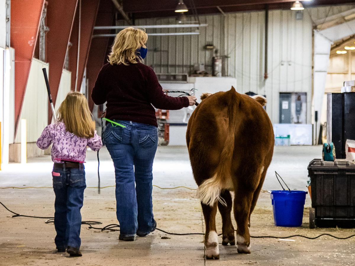 Cows and hugs at the Comanche County Spring Livestock Show