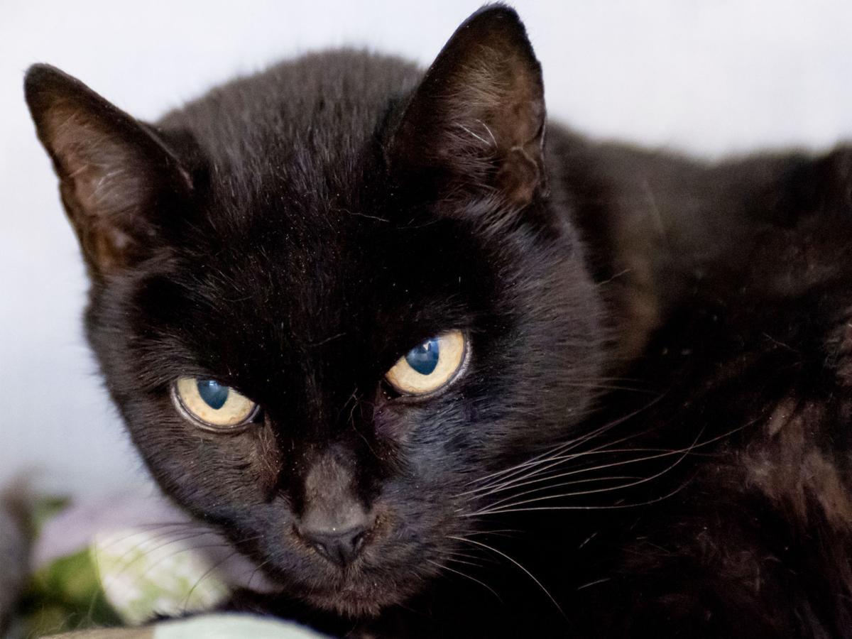 CAPA Pet of the Week -- Callie