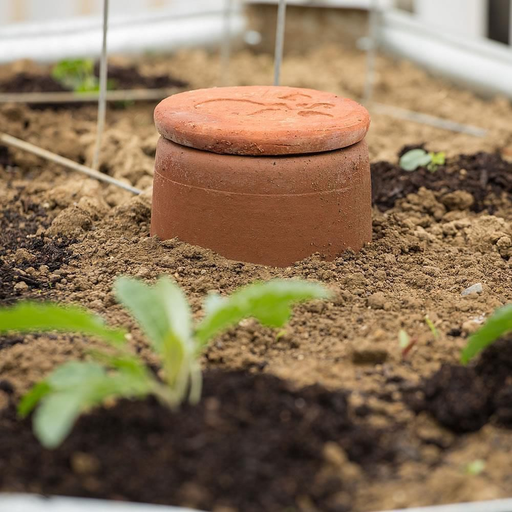 Waterwise irrigation system for your pumpkin patch | The Garden Of ...