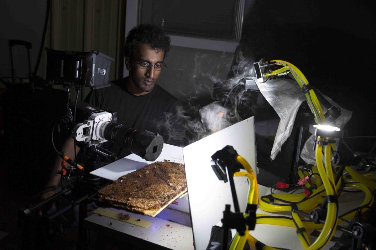 Understanding bats, bees and zombie parasites