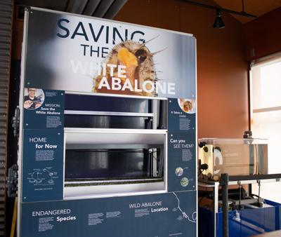 071119 White Abalone Installation Sea Center