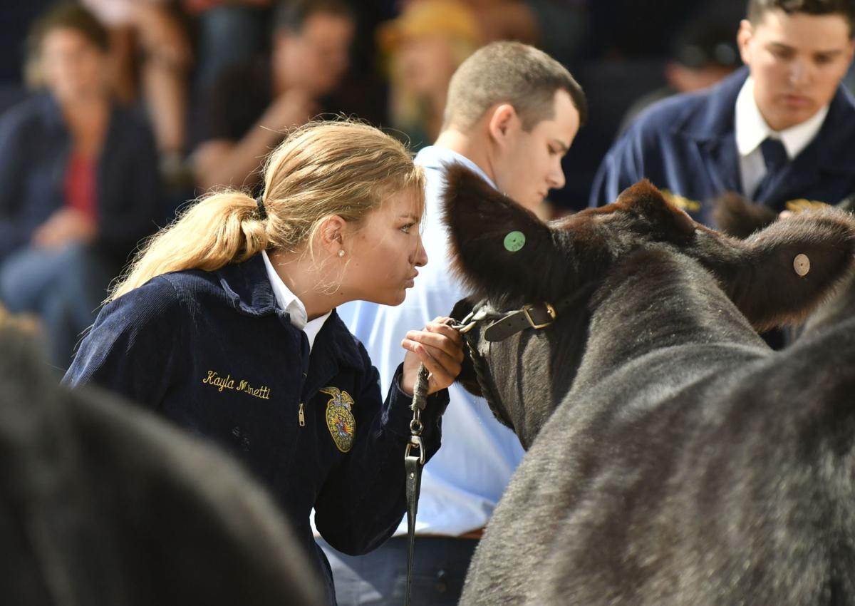 071018 County Fair steer judging 01.jpg