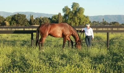 Fairfield Farm, new 20-acre luxury horse farm, set to open in Santa Ynez