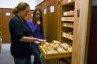 12219 Museum Cabinet 3