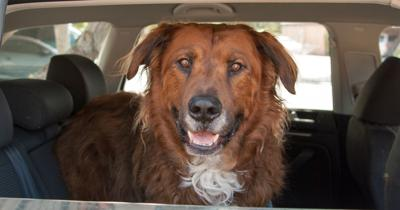 Top 5 Tips for Saving Money on Road Trips With Your Pet (image)