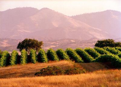053019 Gainey Vineyards 1