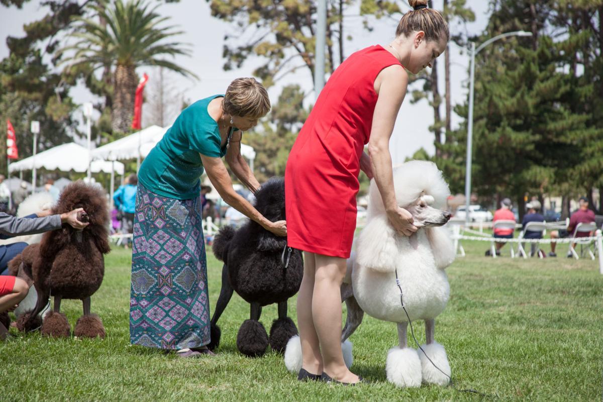 072917-lr-news-lompoc-dog-show 02.jpg