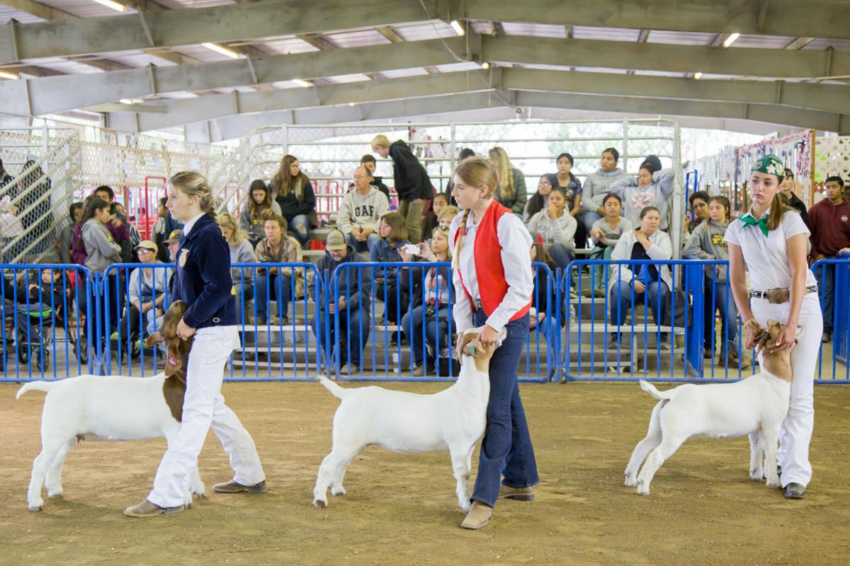 070919 SB Fair Animal Judging 01.jpg