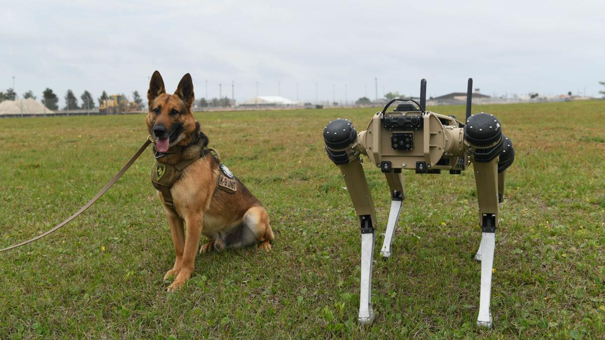 325th Security Forces Squadron military working dog