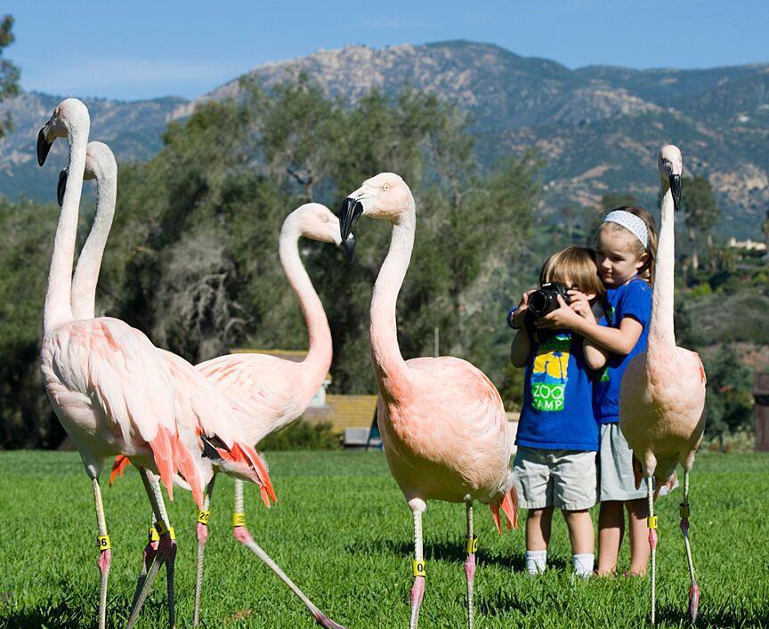 Santa Barbara Zoo 1