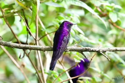 011221 Birding