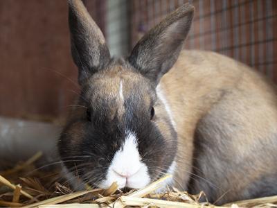 CAPA Pet of the Week -- Lance