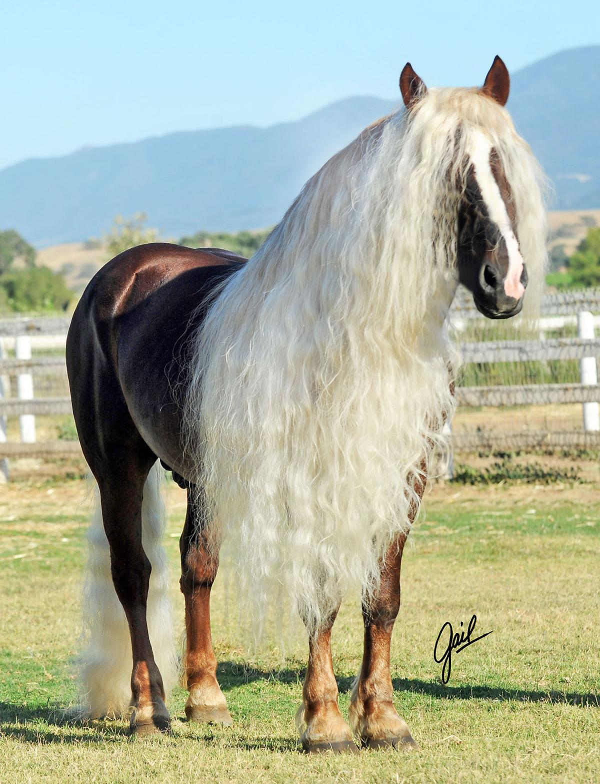 Spectacular horses