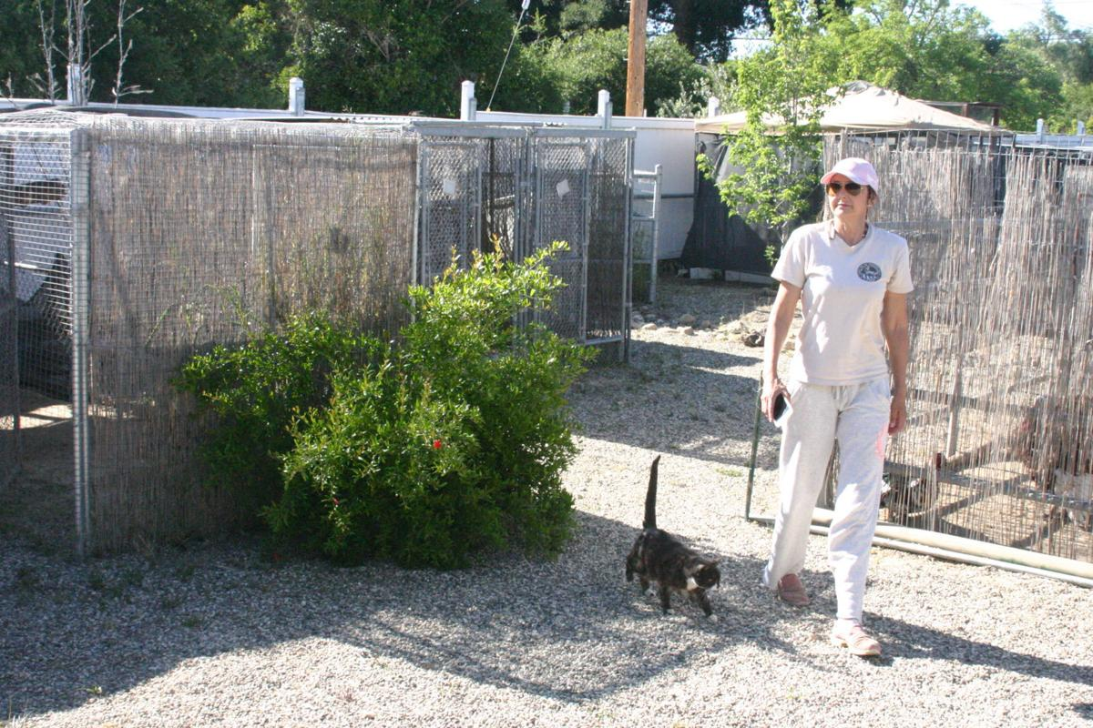 Julie DiSieno with cat