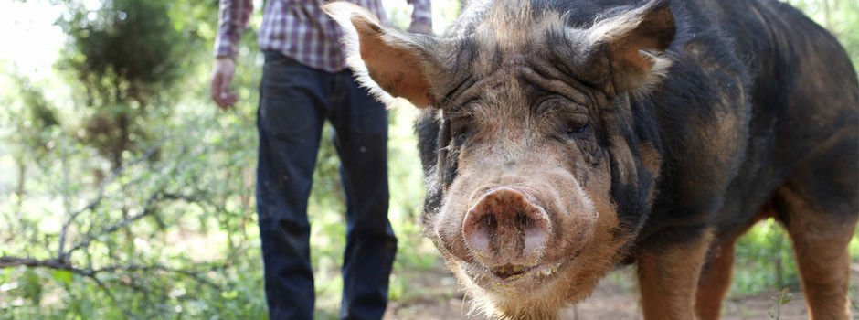 Open house at Valley Piggery