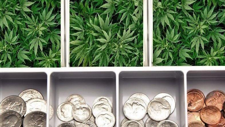 Santa Barbara County's rising cannabis tax revenue trend goes up in smoke