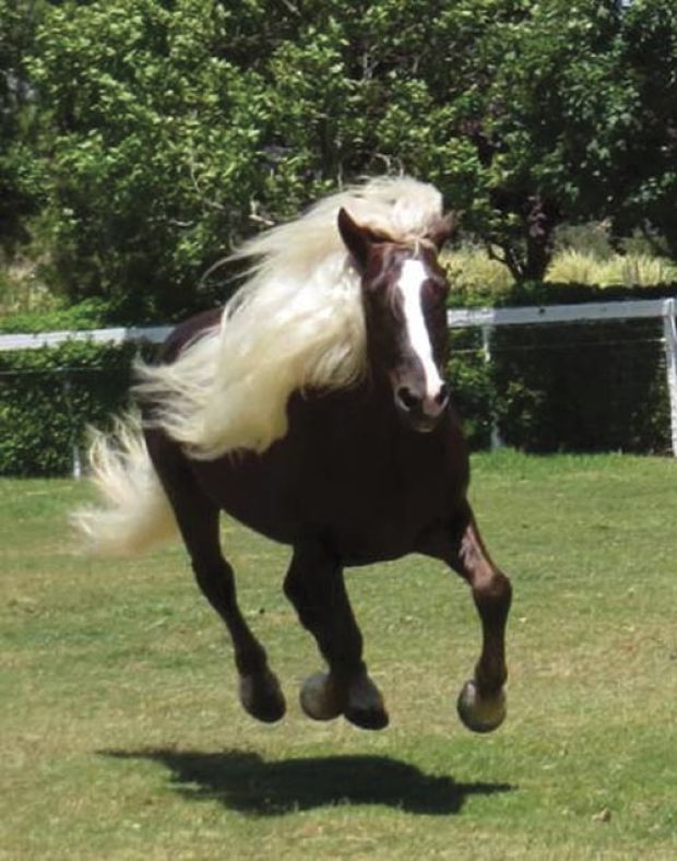 Rare horse breeds featured at tour