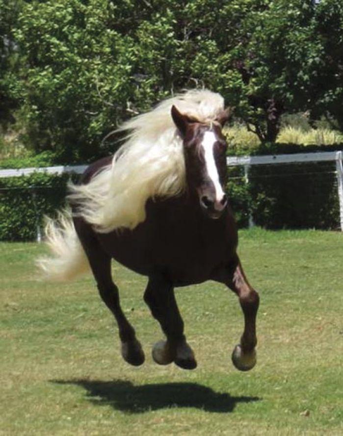 Rare Horse Breeds Featured At Tour Pets Syvnews Com