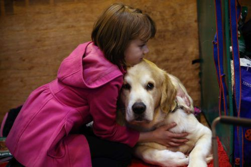 How To Know When It's Time To Euthanize Your Pet—advice From A Veterinarian