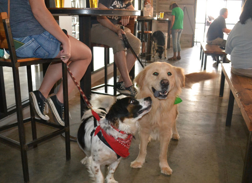 Dog Friendly Breweries and Your Four-Legged Sidekick (image)