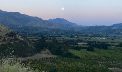a09aaadae Ojai herbalist Lanny Kaufer will lead a moon-sunset nature walk July ...