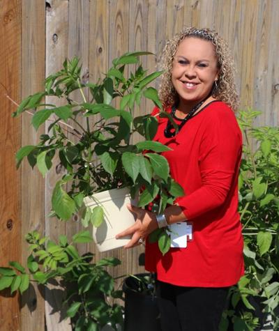 CNB helping preserve traditional plants