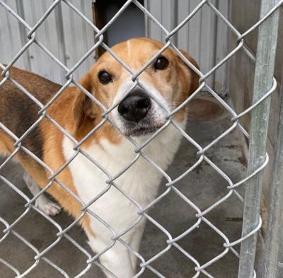 OK TO THE RESCUE: Bill designated rescue animals as official state pet, but advocates say more needs to be done