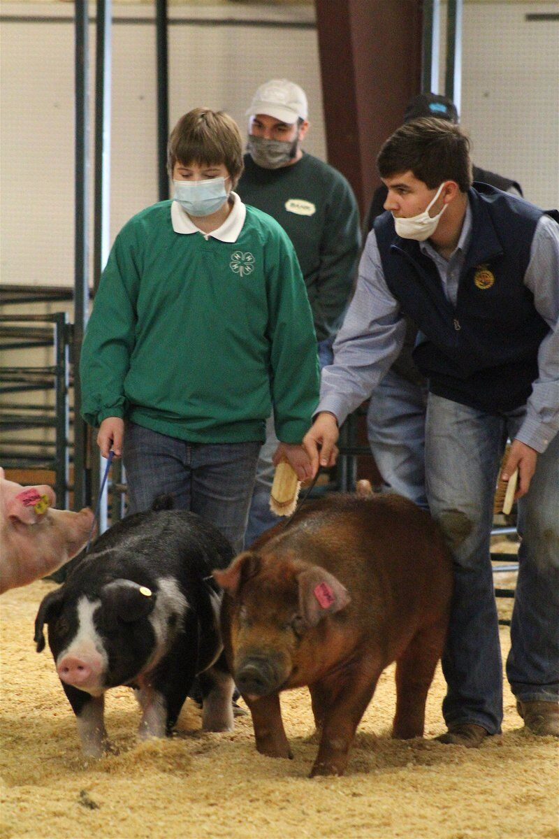HOGGING THE RING: Students follow family footsteps in county livestock show