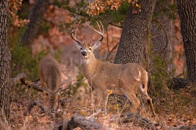 Deer hunting season will open Nov. 23