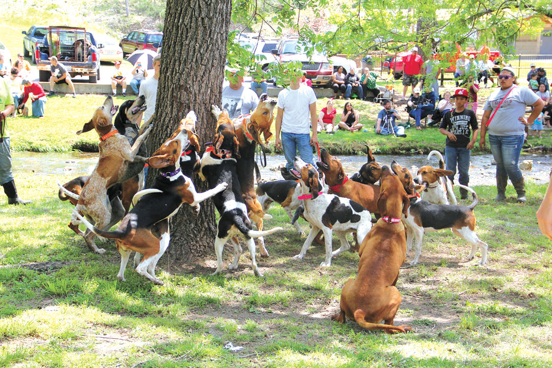 Red Fern hounds