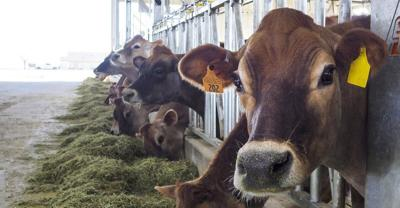 Dairy research improves production for industry