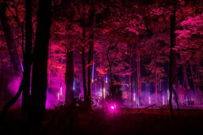 Crystal Bridges offers installations in forest light