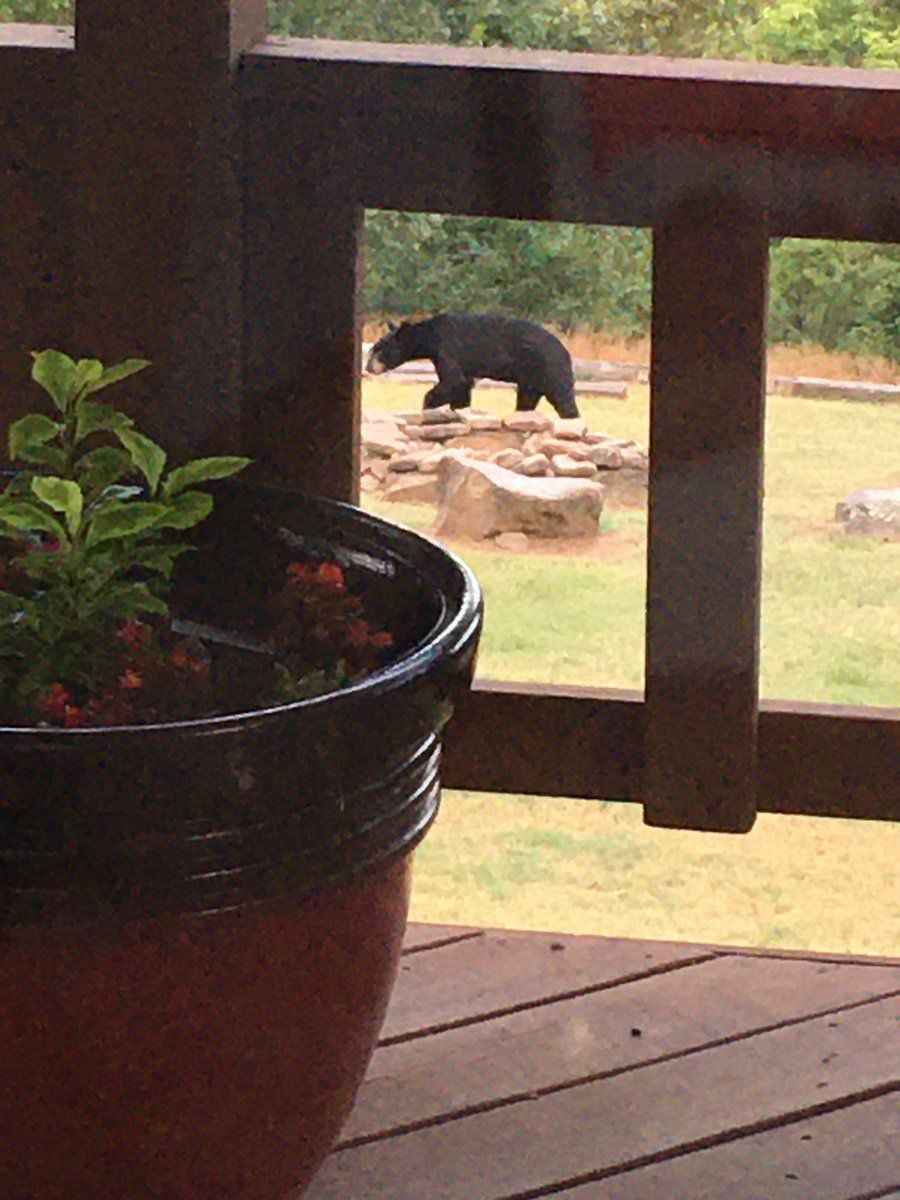 'Bearly' there: Most Tenkiller residents OK with 'guests'