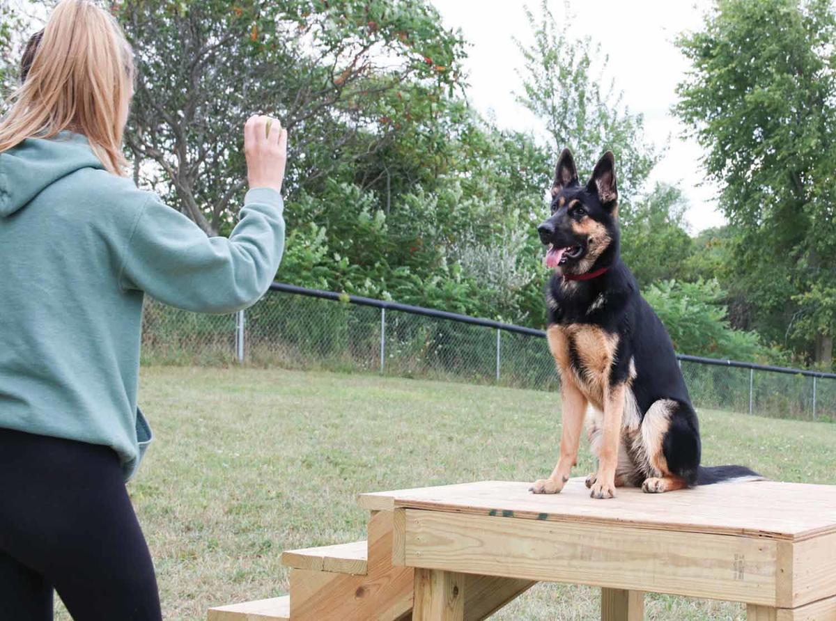 9-1 dog park agility equipmentC_HANNAH-2.jpg