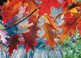 9-15 Fall ColorsC_Bernard Spragg.jpg