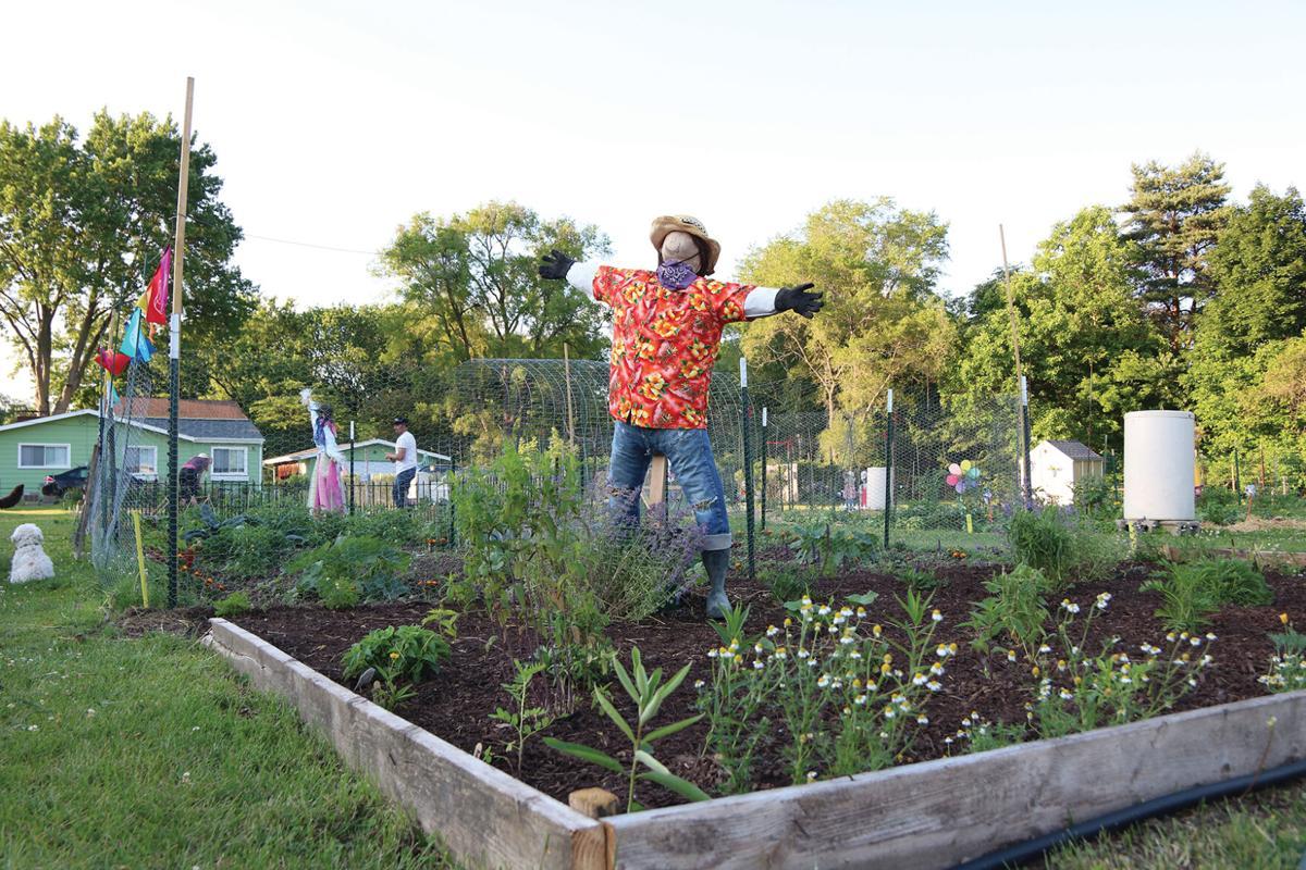 Fenton Community Garden 14.JPG