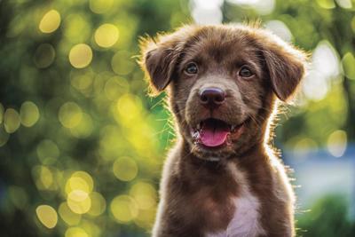 GenPhoto_puppy