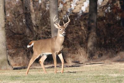 deer-2264351_1920.jpg
