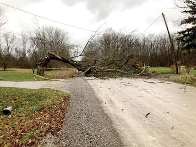 consumers energy downed trees.jpg